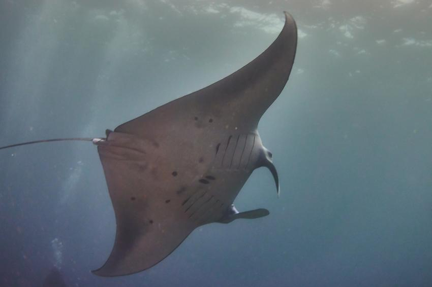 ORCA Diveclub Candidasa, Bali, Indonesien, Bali