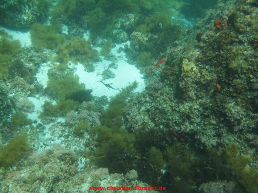 Backbeach Boomie, Bremer Bay, Westaustralien, Backbeach Boomie,Bremer Bay,Westaustralien,Australien