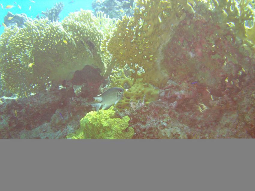 Hurghada -  Dolphin Reef, Dolphin Reef,Hurghada,Ägypten