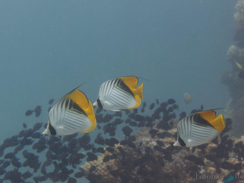 El Quseir, Sharm Fugani - Ras Fungani (Mangrove Bay),Ägypten