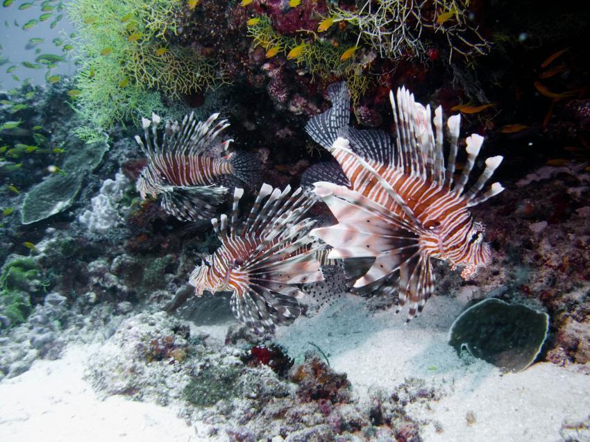 Amba Tauchsafari - Haa Alifu Atoll
