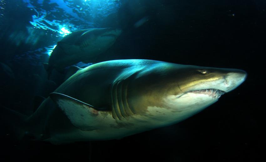 Oceanium Kapstadt, Kapstadt,Two Oceans Aquarium,Südafrika