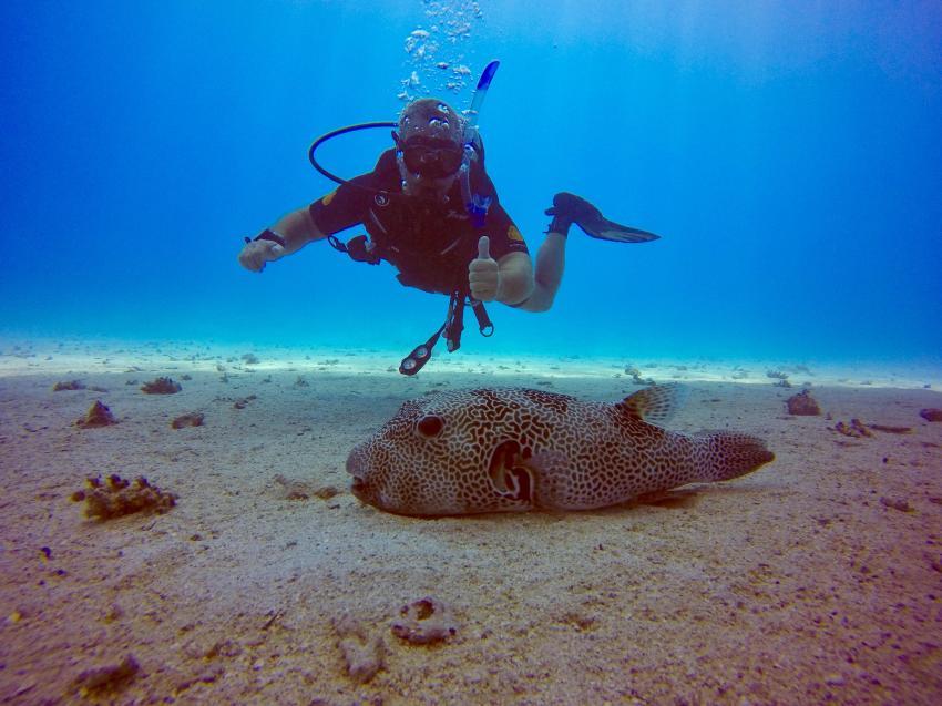 SuneoClub Reef Marsa_Port Ghalib_Hausriff_4, Ägypten Tauchen Marsa Alam Port Ghalib, Scuba World Divers, SuneoClub Reef Marsa, Port Ghalib, Ägypten, El Quseir bis Port Ghalib
