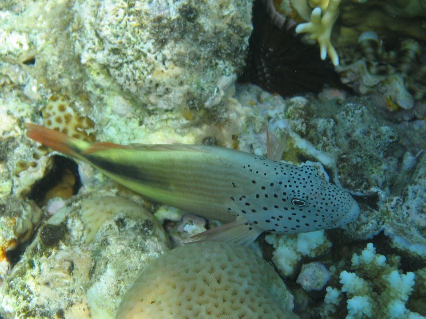 Ras Mohammed - Jolanda / Shark Reef, Ras Mohammed,Ägypten