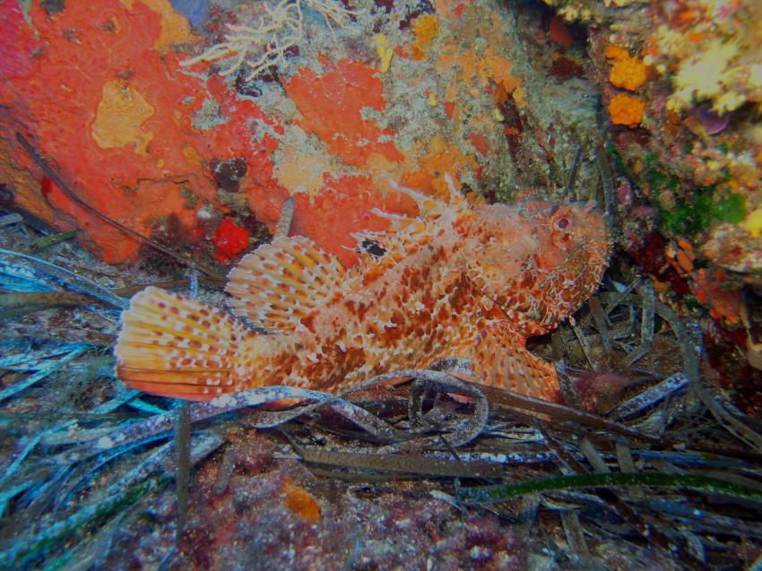 Aqualonde Plongée, La Londe les Maures,Frankreich