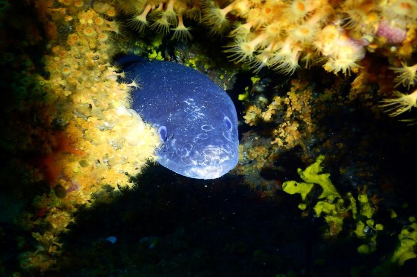KRON Diving Center, Kampor, Insel Rab, Kroatien