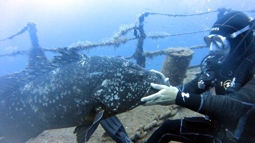 Rhea Dive Centre, Porto Santo, Madeira, Portugal, Madeira
