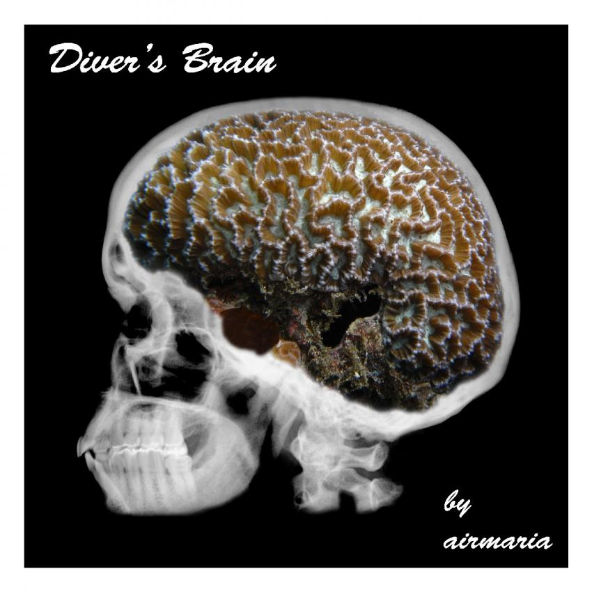 Diver's Brain, Hudhuranfushi,Malediven