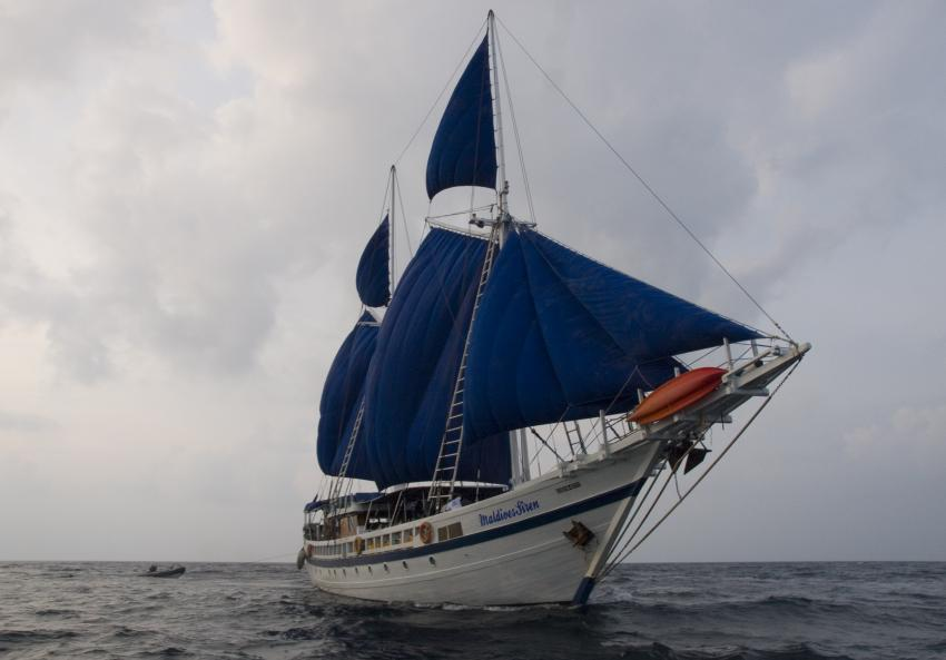 SY Siren Tauchsafari südliche Atolle, Tauchsafari südliche Atolle,Malediven,Tauchsafari,Safariboot,Segelschiff