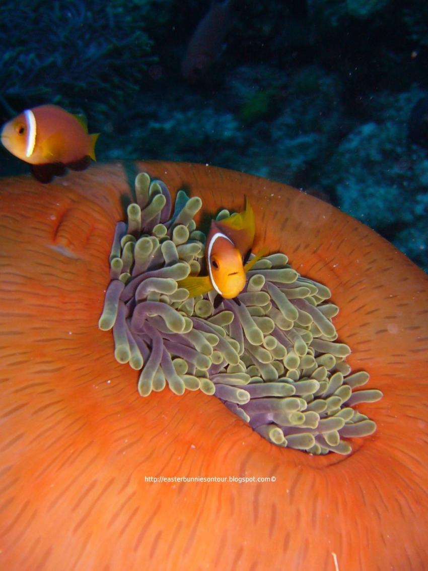 Ocean Pro, Meeru Island Resort
