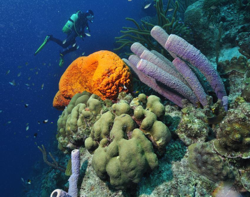 Weissfleckenfeilenfisch