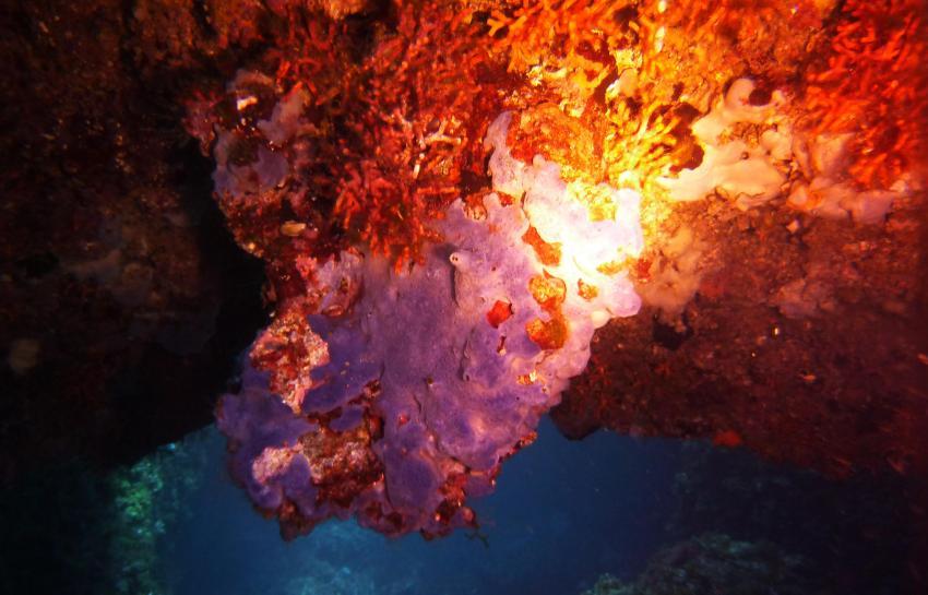 In der Höhle, Punta Dive (Cala Martina), Spanien, Balearen