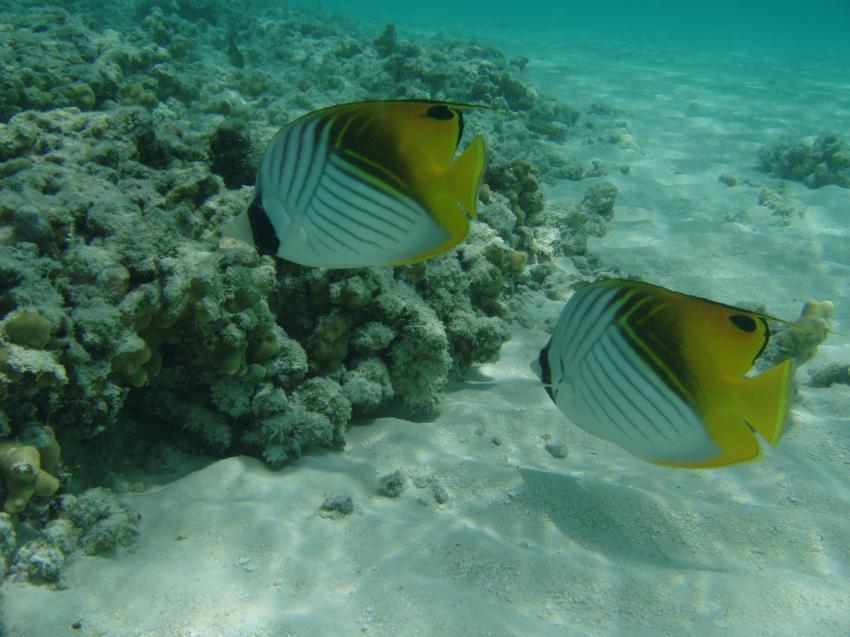 Biyadoo, Biyadoo,Malediven