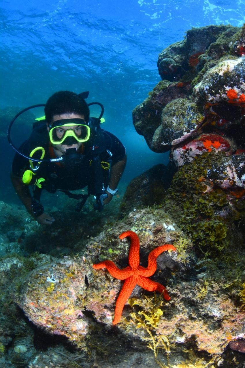 tauchen auf Gran Canaria nitrox free, #tauchen #GranCanaria #nitrox #free #wrack #tauchbasis @schnuppertauchen, Zeus Dive Center, Playa del Ingles, Gran Canaria, Spanien, Kanaren (Kanarische Inseln)