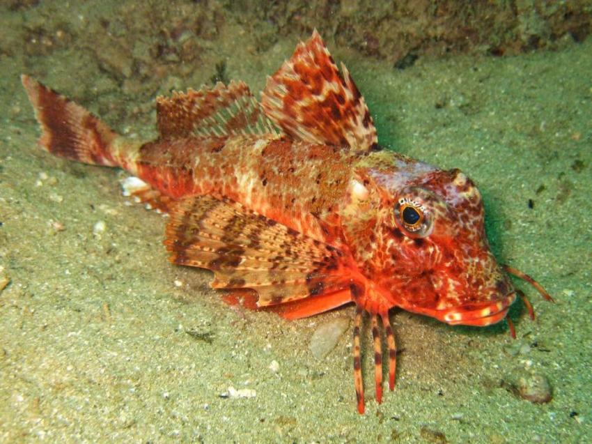 Dive Club Cipreia, Lagos, Portugal