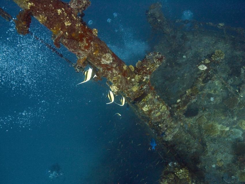 Kudimaa Wrack, Machchafushi,Ari Atoll,Malediven,Wrack,Mast
