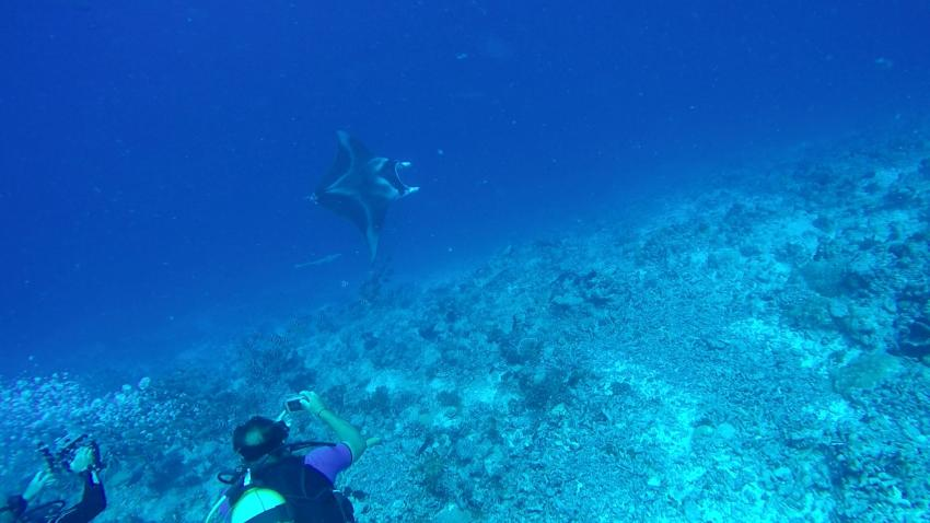 Manta am Tiputa Pass, The Six Passengers Diving Center, Rangiroa, Französisch-Polynesien