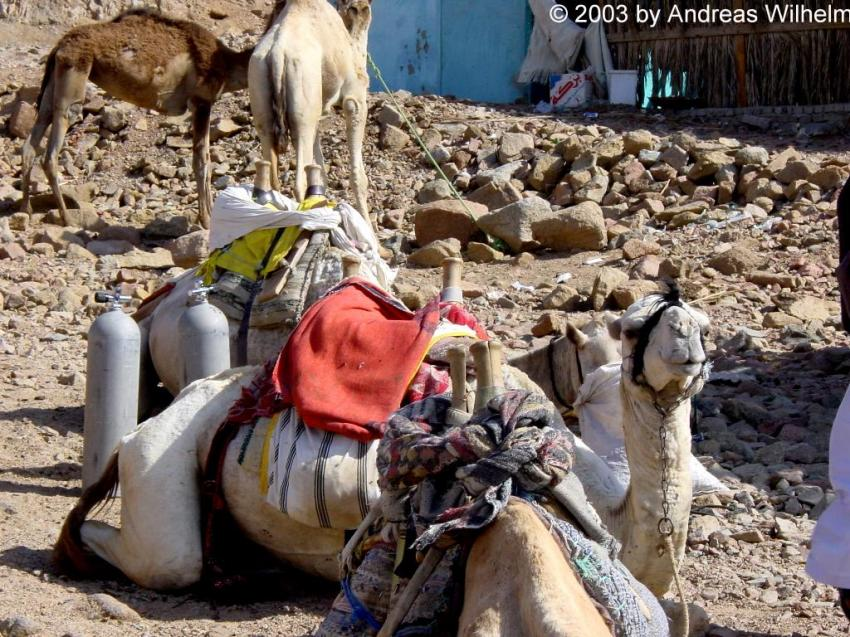 Dahab - Ras Abu Galoum, Ras Abu Galoum,Dahab/Nuweiba,Ägypten