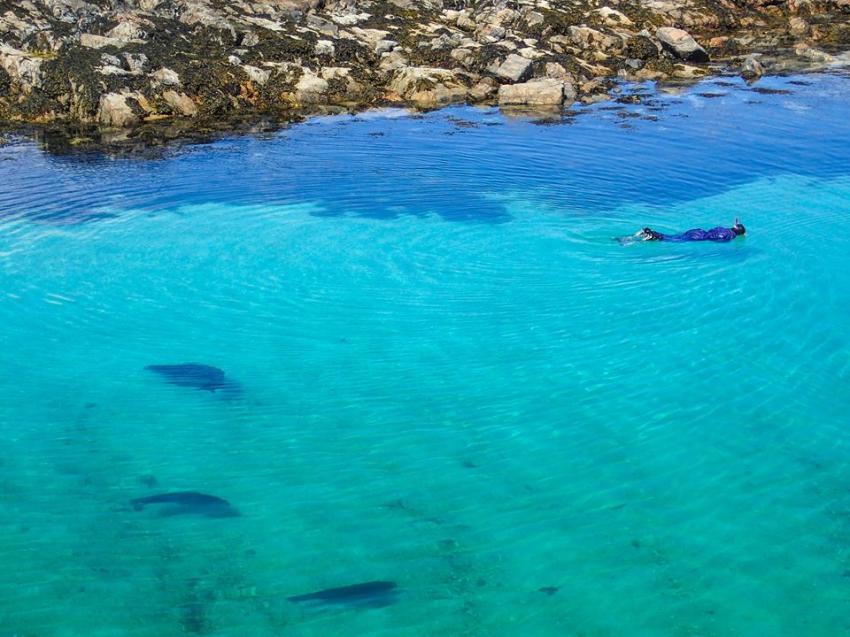 Im Wasser mitr Seehunden, Cairns of Coll, Seehunde, Schottland, Basking Shark Scotland, Großbritannien