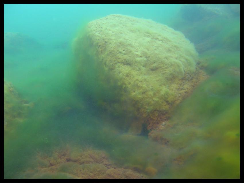 Senftenberger See, Senftenberger See,Senftenberg,Brandenburg,Deutschland,stein,felsen,schlamm,algen,trüb