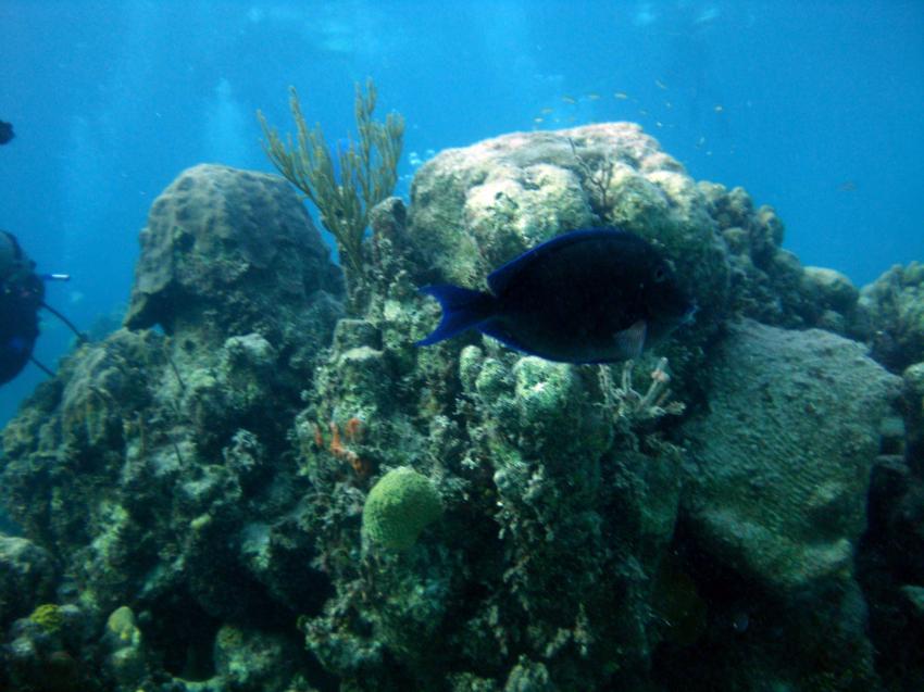New Providence, New Providence,Bahamas