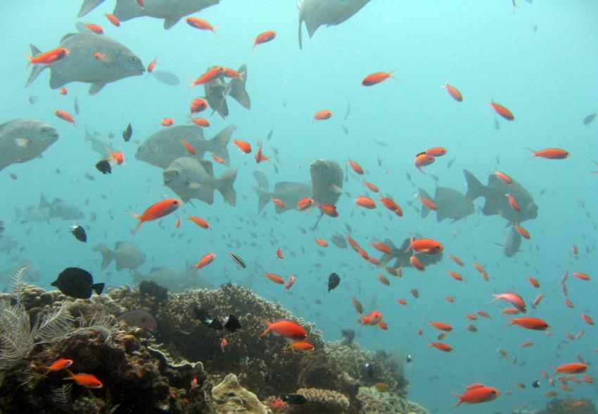 Alam Anda Ost, Bali Nordküste,Indonesien
