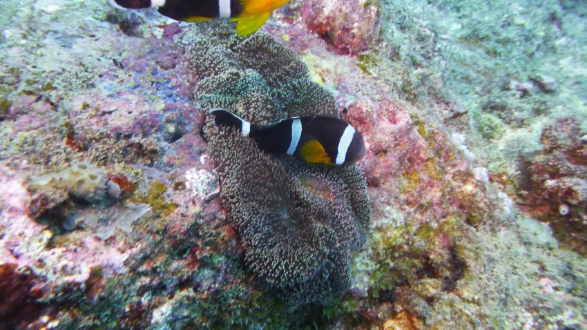 Viel Strömung, Sun Divers Ltd., Flic en Flac, Mauritius