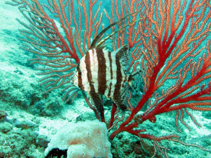 Atlantic Diving Center, Santana, Sao Tome und Principe