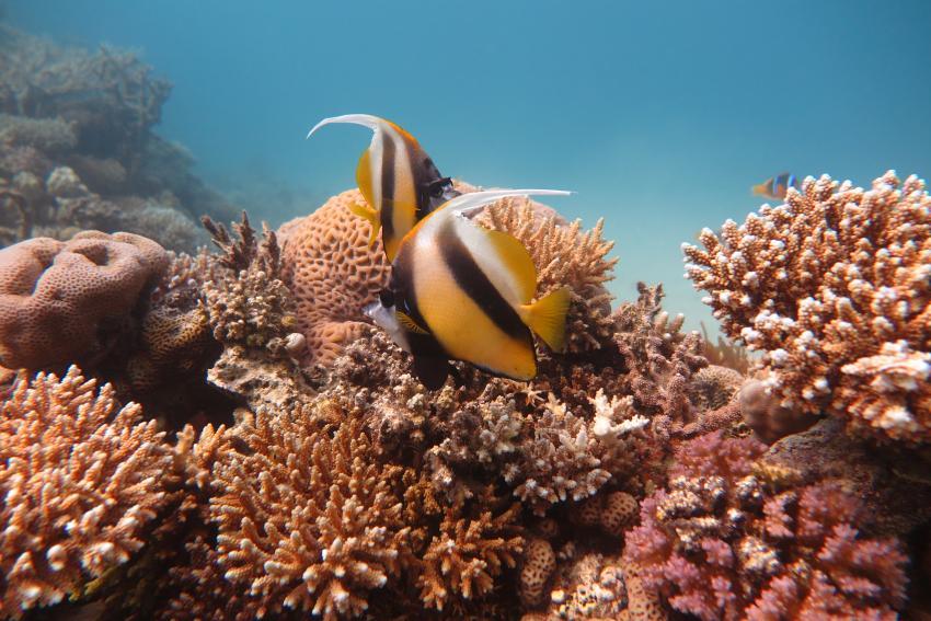Scuba World Divers Makadi Bay_Hausriff_3, Tauchen in der Makadi Bay, Scuba World Divers Makadi Bay, Ägypten, Hurghada