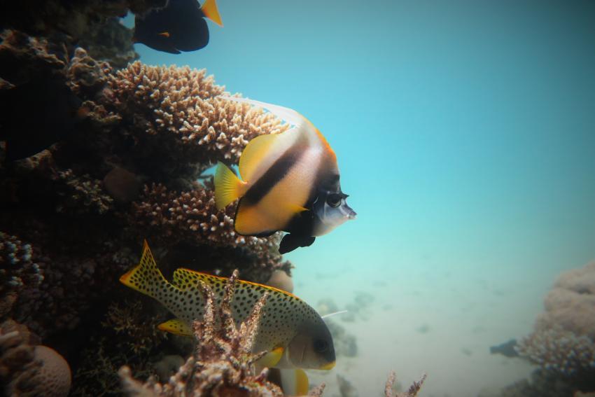 Scuba World Divers_Makadi Bay_Hausriff_1, Tauchen in der Makadi Bay, Scuba World Divers Makadi Bay, Ägypten, Hurghada