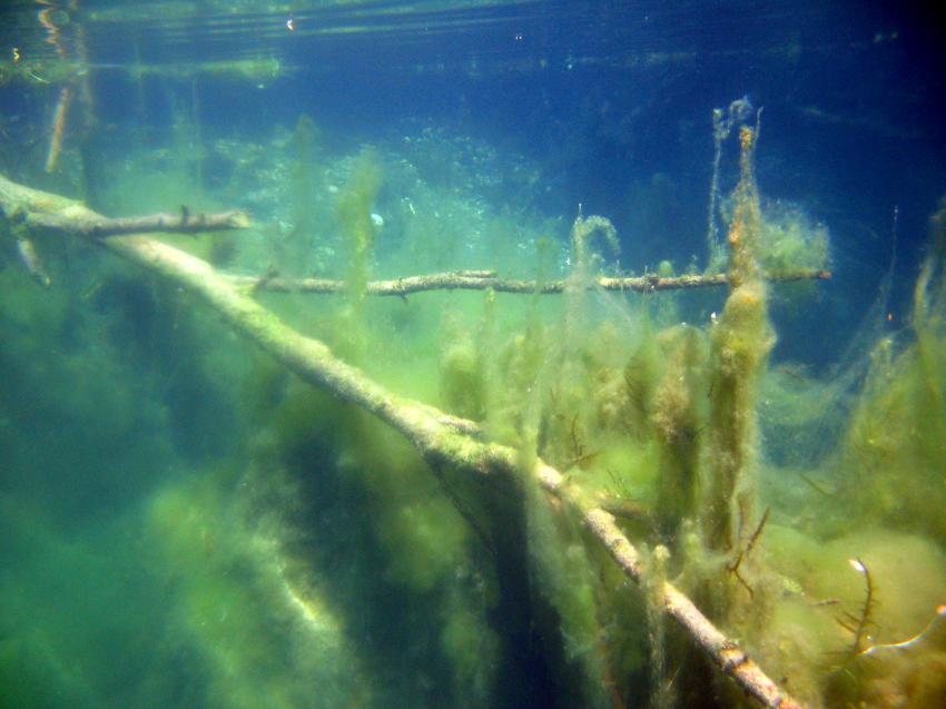 Mossee Allgäu, Moossee,Bayern,Deutschland,Mossee,Allgäu,Schleimalgen,algen,äste,eutrophie