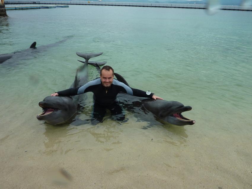 spielen mit Delfinen