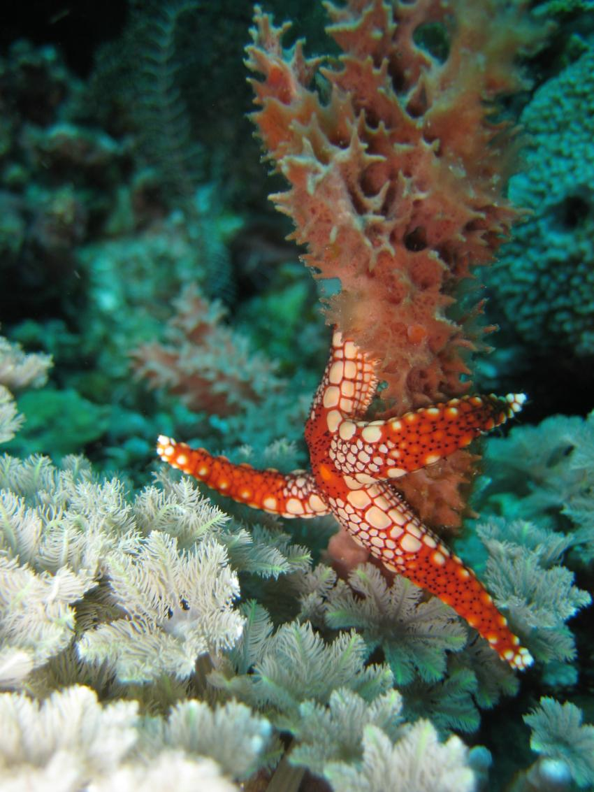 Bunaken 2009, Sulawesi,Indonesien