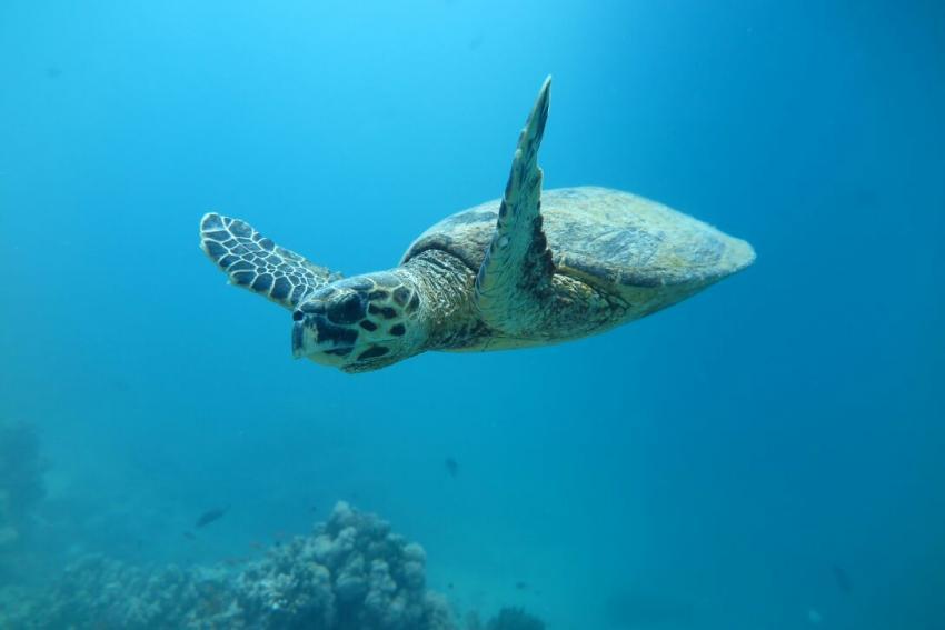 SWDS4, Tauchen in El Quseir, Scuba World Divers El Quseir, SENTIDO Oriental Dream Resort, Ägypten, El Quseir bis Port Ghalib