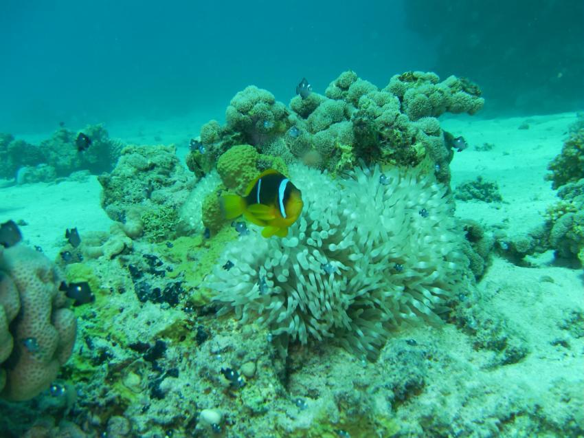 Akassia Diving Spot ´ZERIB KEBIR´, Akassia Divingspot,ZERIB KEBIR,Ägypten
