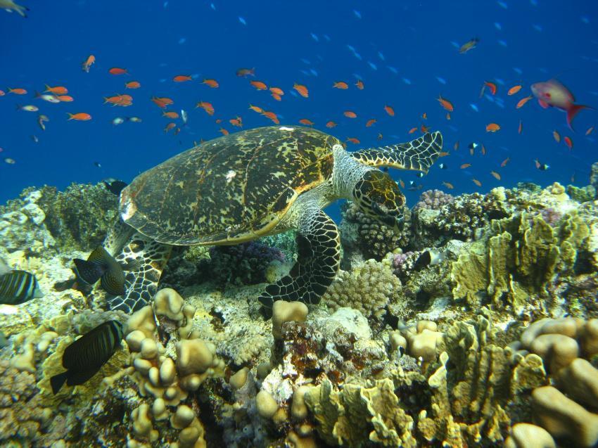 South Red Sea Diving Club, El Quseir