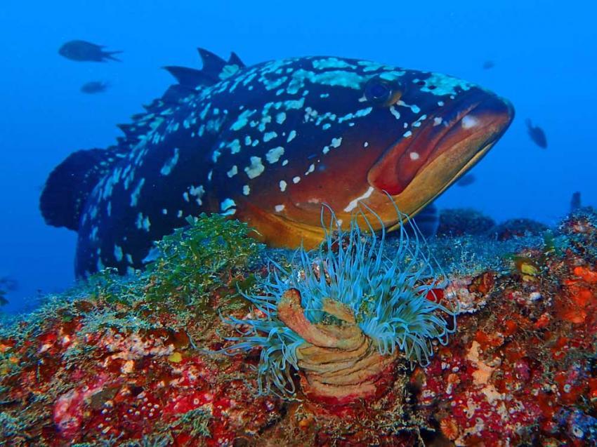 Nautic Dive, Lanzarote / Tauchen mit Matthias, Spanien, Kanaren (Kanarische Inseln)