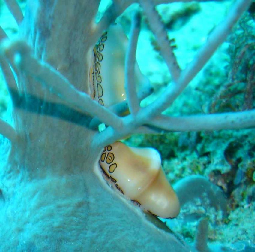 Boca Chica, Tauchen mit Sea Pro im Hamaca Coral  by Hilton, Boca Chica,Dominikanische Republik