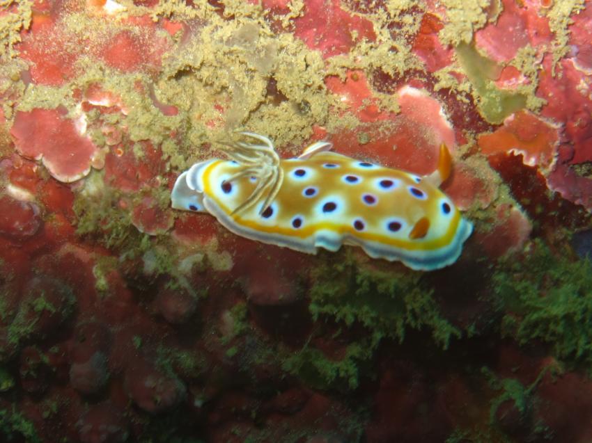 Schneck 2, Unawatuna Diving Centre, Sri Lanka