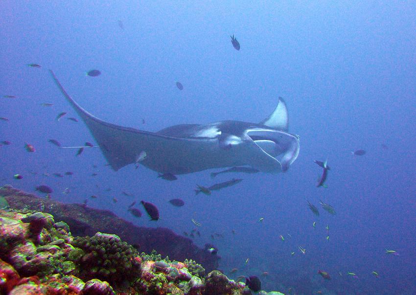 Paradise Island / Manta Point (Nord Male Atoll), Paradise Island,Malediven