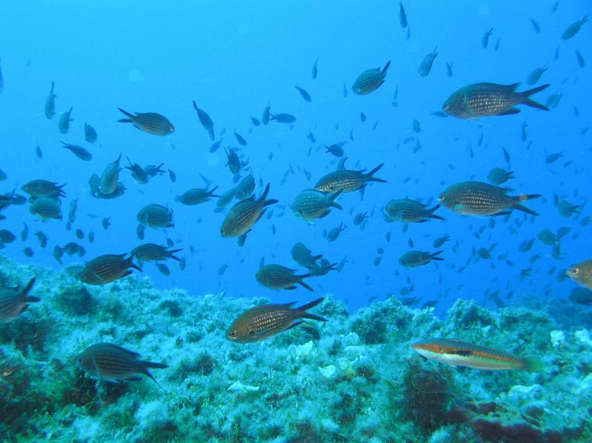 Blue Bubbles Diving - Recreational & Technical, Italien, Sardinien