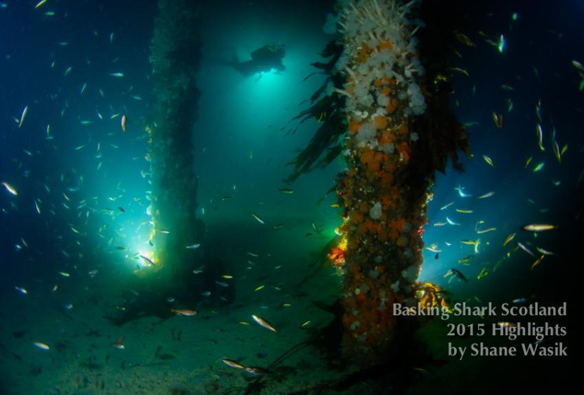 Nachttauchgang vom Pier, night dive, pier dive, Basking Shark Scotland, Oban, Großbritannien, Schottland