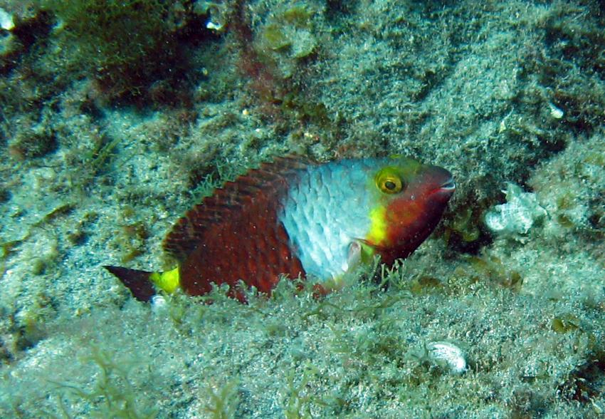 Playa Paraiso Teneriffa Barakuda Club