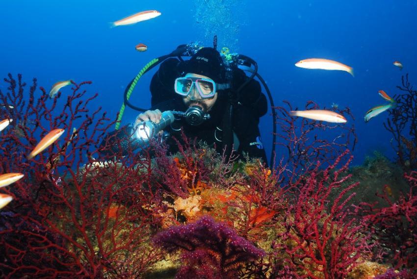 Isola del Giglio, Giglio,Italien,taucher,korallen,gorgonien