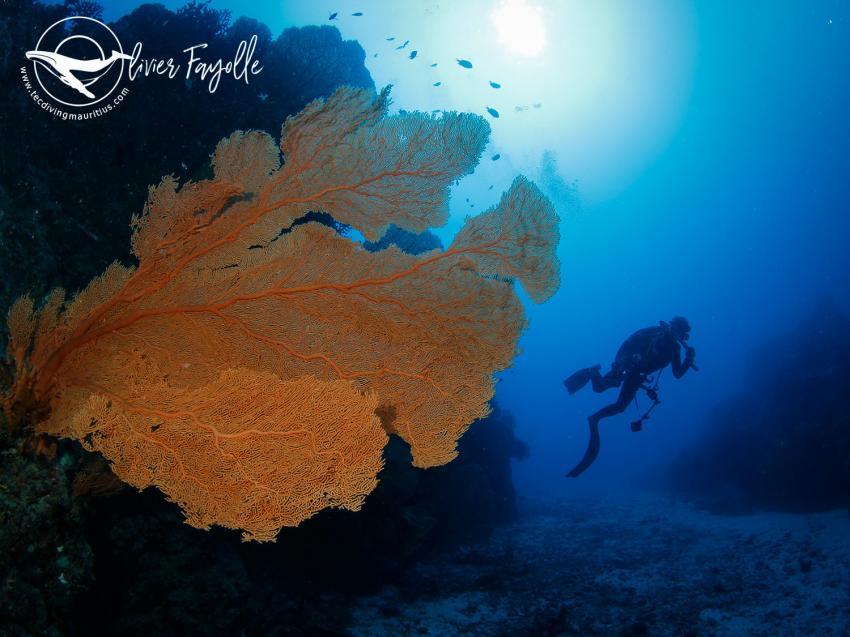 TEC Diving Mauritius, Mauritius