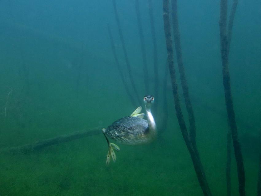 Ein paar Bilder aus dem Kulkwitzer See