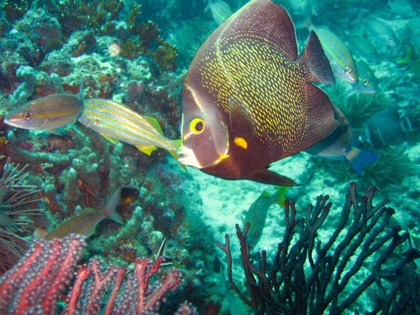 Los Frailes, Los Frailes,Venezuela,Rifffische