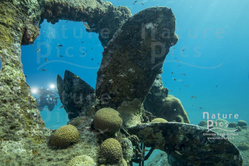 Black Sand Beach Wreck - bei Playa Sta. Cruz, Poppy Hostel Curacao, Willemstad, Niederländische Antillen, Curaçao