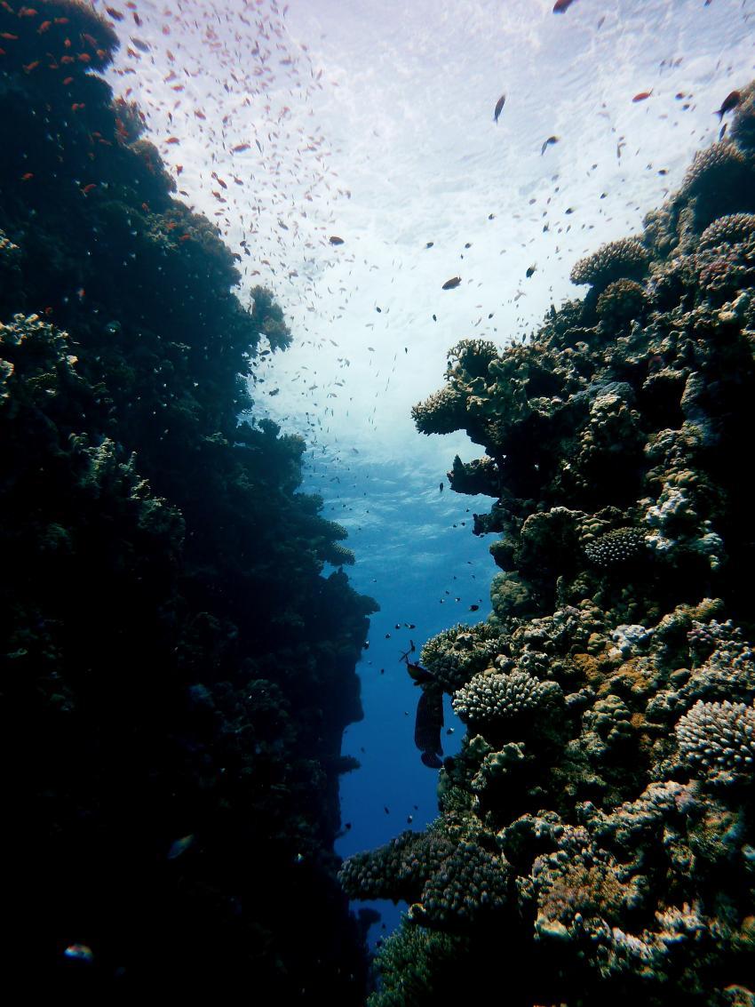 Riffblicke, Tobia Kebir,Ägypten,Erg,Canyon,Rifffische