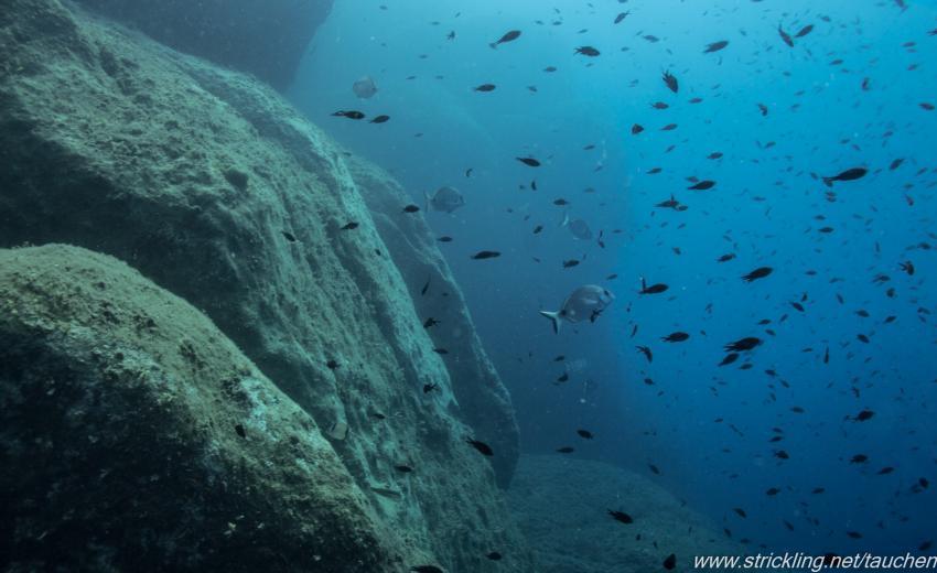 Fischsuppe, Dr. Wolfgang Strickling, Spiro-Sub, Marina di Campo (Elba), Italien